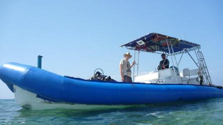 סירת טורנדו ספארי ים כחולה
