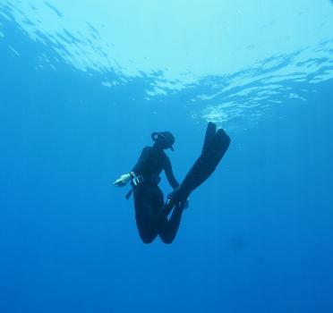 צלילה חופשית לעומק